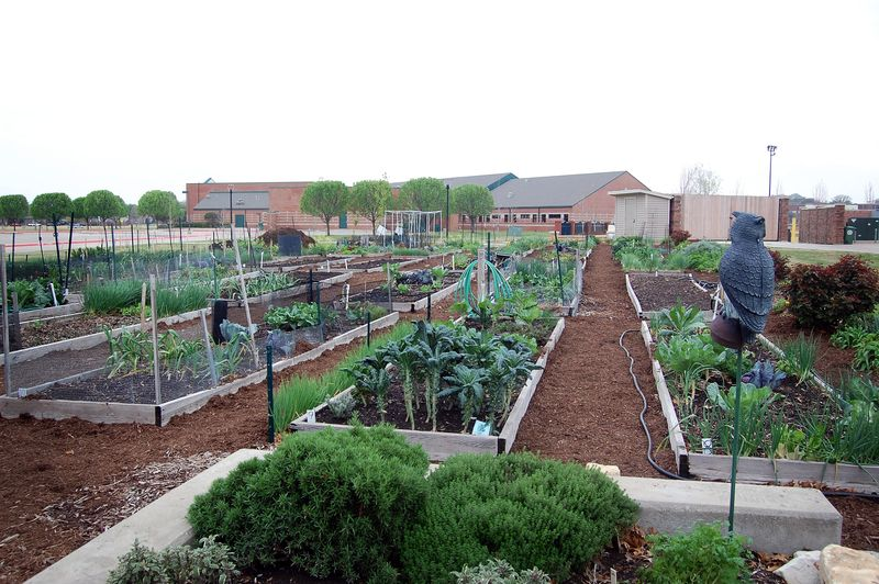 Communitygarden1