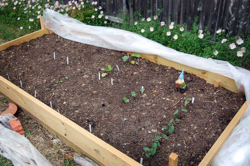 Garden6_041509