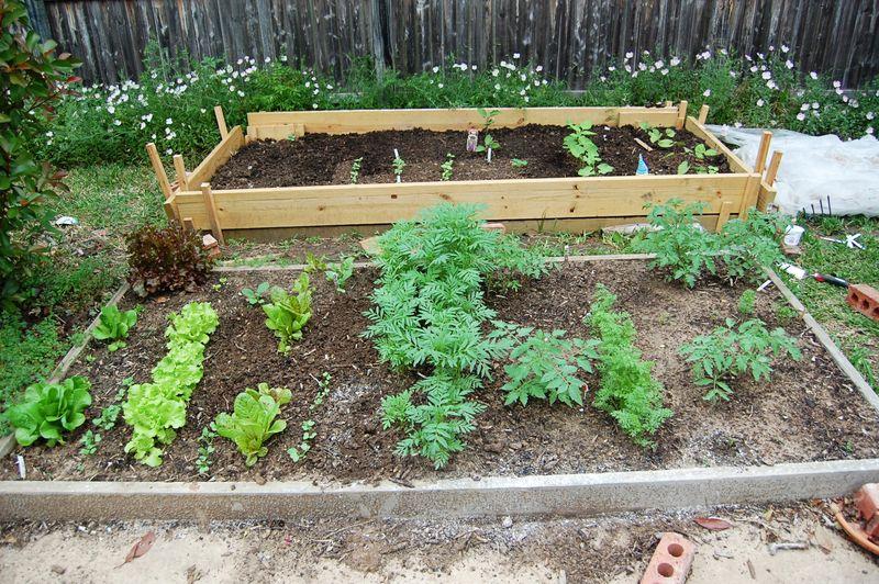Garden_050109